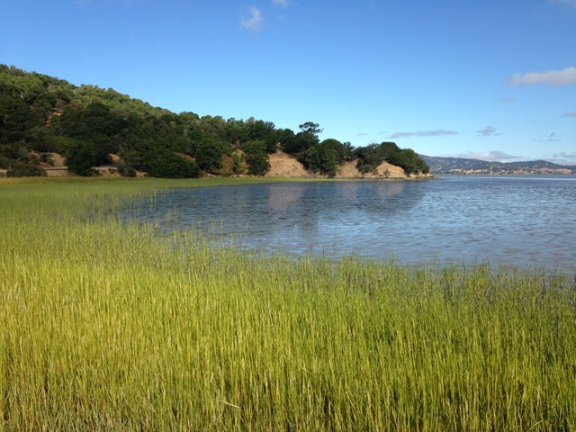 Salt marsh and bay