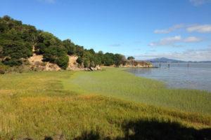 Salt Marsh, San Francisco Bay, Marin County