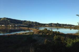 Two salt water ponnds next to San Francisco Bay, Marin County