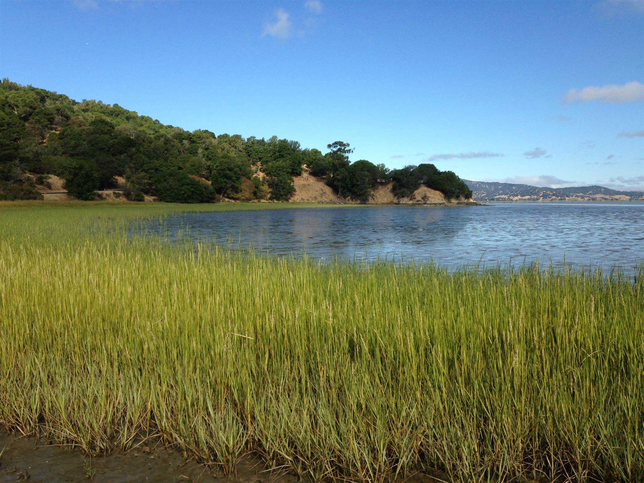 Salt Marsh, San Francisco Bay, Marin County